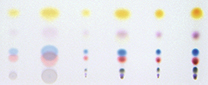 コンタクト方式によるスポット状の サンプル塗布